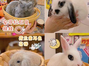 丸子家兔咖