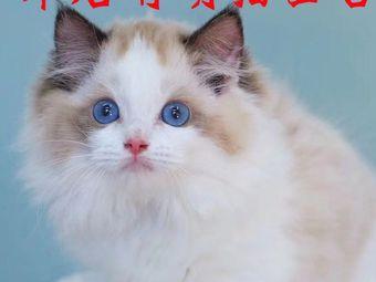 Miko躲猫猫撸猫咖啡馆·猫舍(中环国际大厦店)