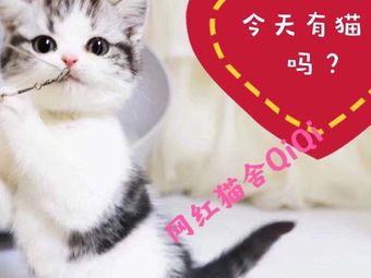 qiqi猫舍曼基康矮脚拿破仑矮脚猫专售