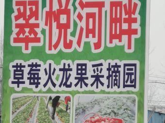 翠悦河畔草莓火龙果采摘园