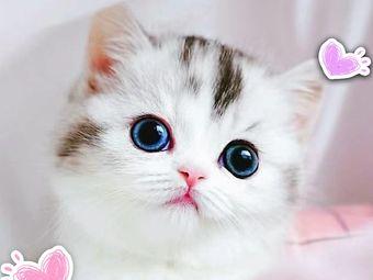 猫咪后院 Neko Atsume猫舍(望京店)