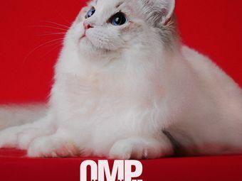 布偶天堂•猫舍