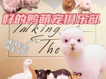 好的鸭萌宠俱乐部·羊驼·柯尔鸭·撸猪·兔子