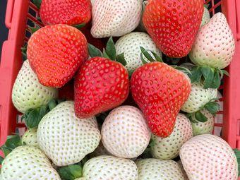 莓好生态草莓采摘基地