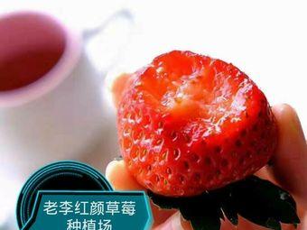 老李红颜草莓种植园