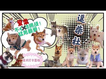 逗柴社柴犬主题咖啡(福佳店)