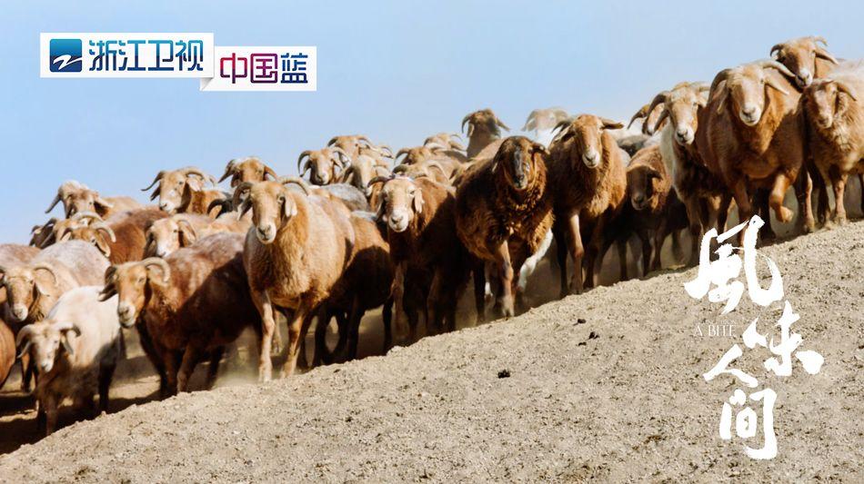 5、成群结队的羊群.jpg