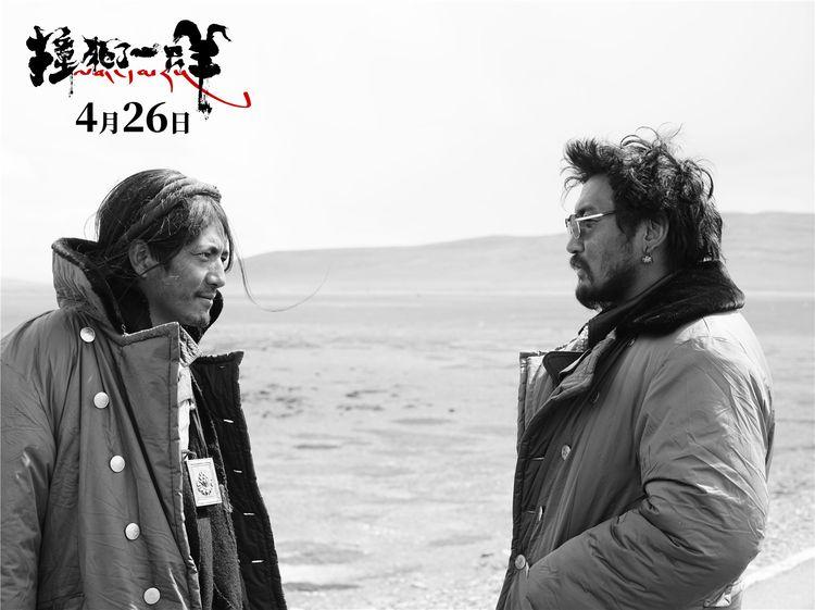 王家卫监制万玛才旦导演《撞死了一只羊》,错过北影节只能等上映  第7张