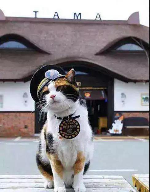 音乐剧《猫》二轮开票|铁路猫的列车正在路上,