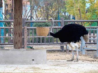 臨泉魔幻動物園