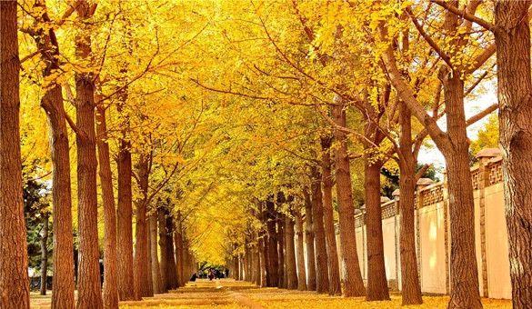 【北京】很有风情的胡同街道