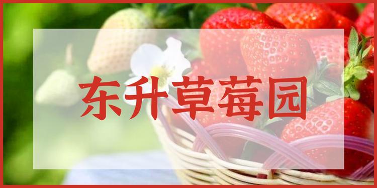 春节通用|东升草莓园|49.9元享两大一小采摘票|包含采摘草莓2斤|冬游好去处